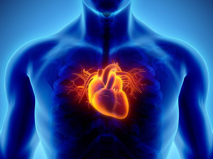 Six Major Risk Factors of Coronary Heart Disease